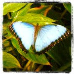 blog-environmental